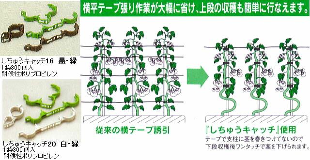 横平テープ張り作業が大幅に省き、上段の収穫も簡単に行えます。