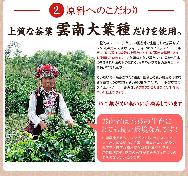 """ティーライフのダイエットプーアール茶は、味も香りも成分も上質といわれる「雲南大葉種」だけを使用しています。"""" /><br/><br/> <br/><br/> <br/><br/> <img src="""