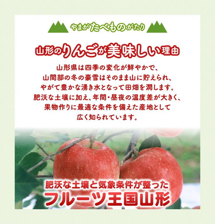 山形のりんごが美味しい理由   山形県は四季の変化が鮮やかで、山間部の冬の豪雪はそのまま山に貯えられ、やがて豊かな湧き水となって田畑を潤します。肥沃な土壌に加え、年間・昼夜の温度差が大きく、果物作りに最適な条件を備えた産地として広く知られています。肥沃な土壌と気象条件が整ったフルーツ王国山形