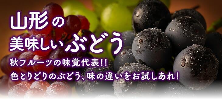 山形の美味しいぶどう   秋フルーツの味覚代表!!色とりどりのぶどう、味の違いをお試しあれ!