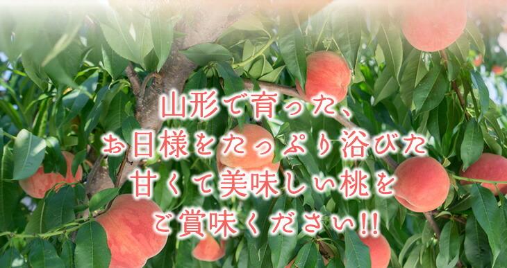 山形で育った、お日様をたっぷり浴びた甘くて美味しい桃をご賞味ください!!