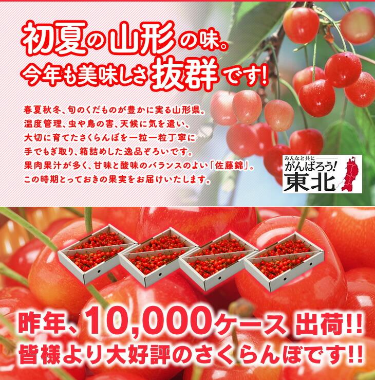 山形県産さくらんぼ、佐藤錦。初夏の山形の味。今年も美味しさ抜群です!