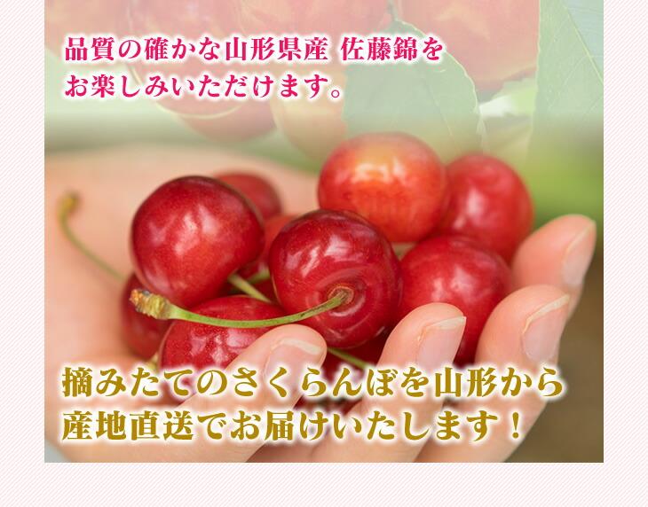 品質の確かな山形県産 佐藤錦をお楽しみいただけます。摘みたてのさくらんぼを山形から産地直送でお届けいたします!