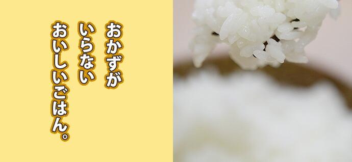 米 - 白米