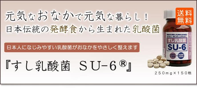 su-6 - 乳酸菌 - 発酵