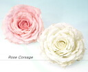 Princess Rose corsage