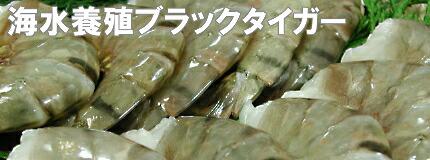 海水養殖ブラックタイガー