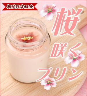 桜咲くプリン