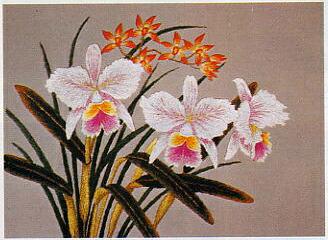 東京文化刺繍キット64「カトレア」(3号)