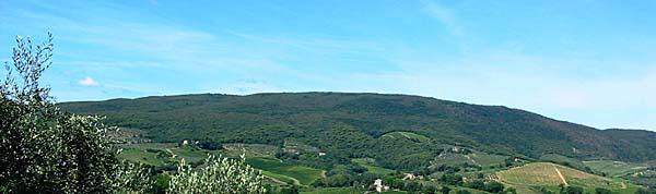 ブドウ畑の風景