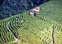 ヴァルドッビアーデネの畑