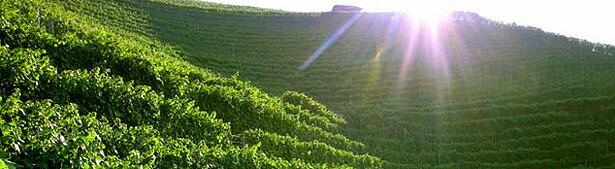 ヴァルマッジョーレの畑