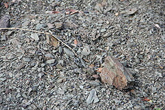 ガレストロ土壌