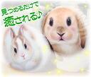 토끼 쿠션 (대) 로비 루비 [헨리 캣 Henry Cats & Friends] 10P12Sep14