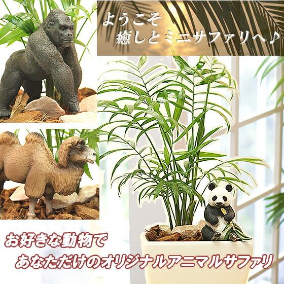 サファリ観葉植物シリーズ