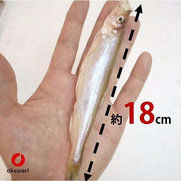 北海道産 本シシャモ