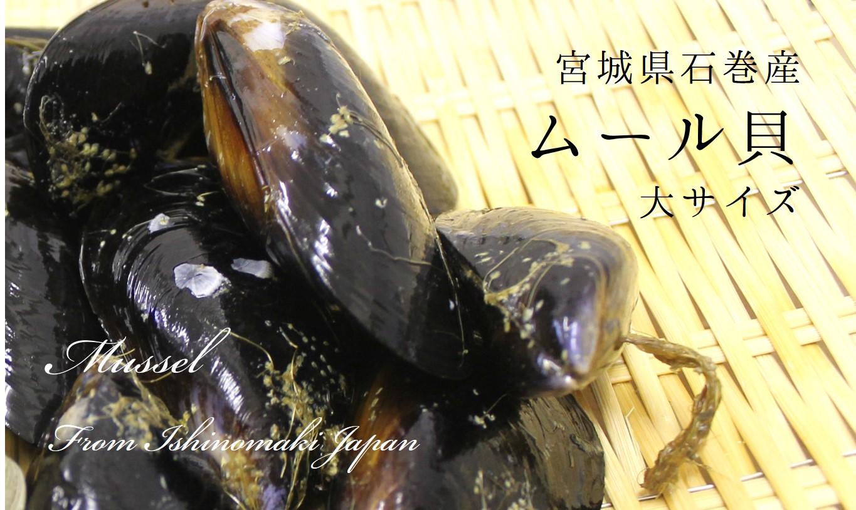宮城県石巻産ムール貝