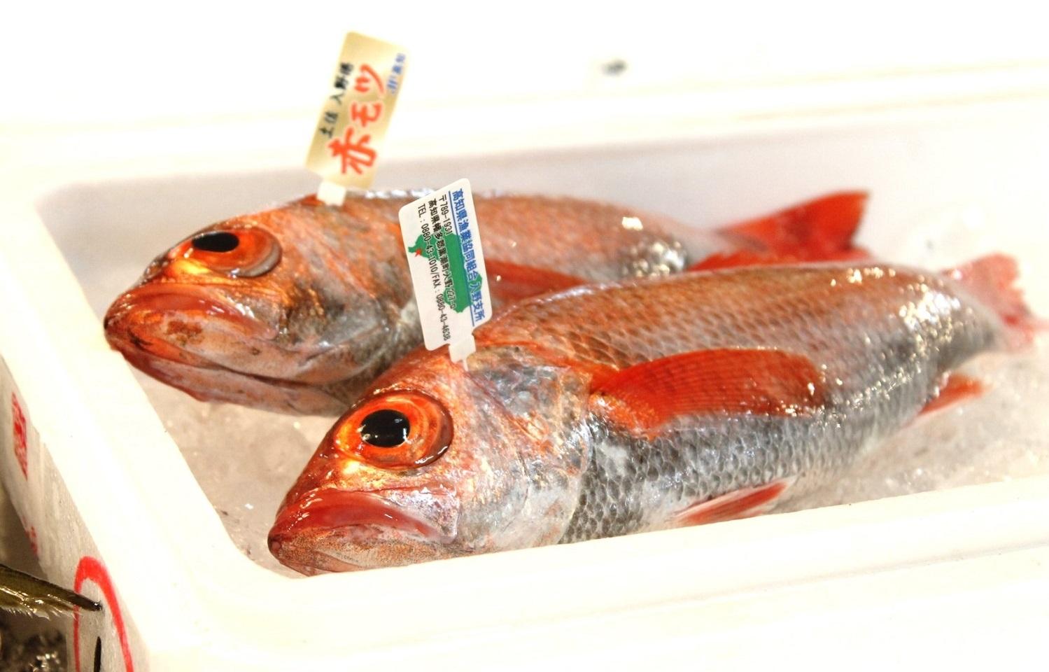 のどぐろ 鮮魚