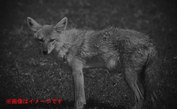 生态的观察和夜间保安,救灾活动,夜间活动的动物,包括广泛的夜间活动