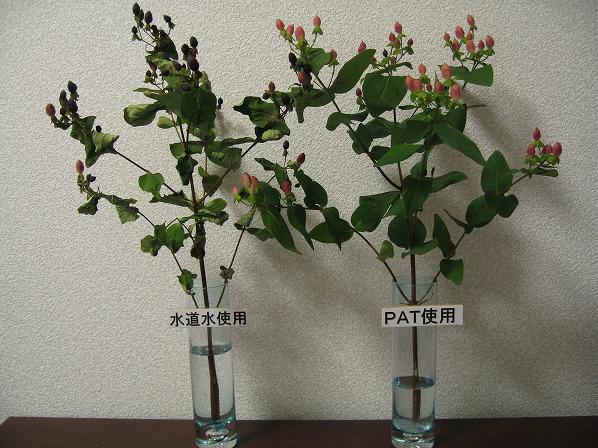 切花用活性化剤PAT