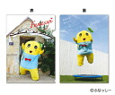 ¥ 120 country ★ beech! and-Lunchbox, clear file, green