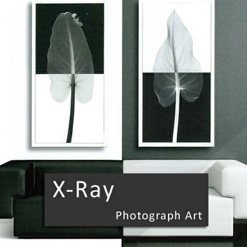 X線フォトグラフィー