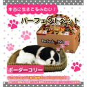 Perfect pet ( for adult plush ) Border Collie 6521