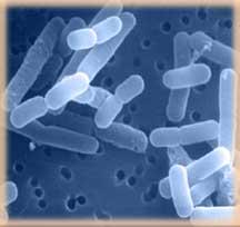プロバイオティクス アシドフィラス 善玉菌 有益菌