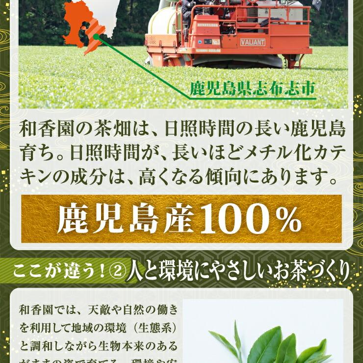 べにふうき 鹿児島 粉茶 花粉症