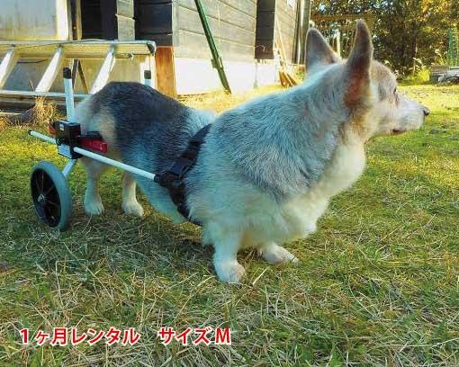 犬用車椅子レンタルM