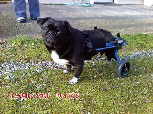 犬用車椅子レンタルS