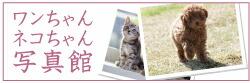ワンちゃんネコちゃん写真館