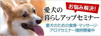 愛犬の暮らしアップセミナー