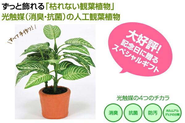 光触媒の人工観葉植物 アートグリーン