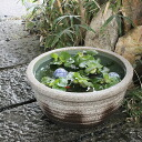 13, Ash glaze Shin raku pottery water bowls! Shin Raku suiren pots! Ideal for fish bowls, fish bowl! Water lilies pots / pottery water lily pot / Lotus pots / already pot / medaka pots / pots / pottery / water coupled pots / water bowl / water lilies pot