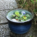 No. 10 green 古信 fun water bowls! Shin Raku suiren pots! Ideal for fish bowls, fish bowl! Water lilies pots / pottery water lily pot / Lotus pots / already pot / medaka pots / pots / pottery / water coupled pots / water bowl / water lilies pots / easy bak