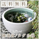 No. 10 white Misty water bowls Shin Raku suiren pots! Ideal for fish bowls, fish bowl! Water lilies pots / pottery water lily pot / Lotus pots / already pot / medaka pots / pots / pottery / water coupled pots / water bowl / water lilies pots / easy baked
