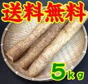 Jinenjo ( Yam ) 5 kg * additional shipping, Northeast takes 300 yen and Hokkaido-Okinawa 500 yen *