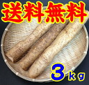 Jinenjo ( Yam ) 3 kg * additional shipping, Northeast takes 300 yen and Hokkaido-Okinawa 500 yen * (10001245)