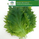 [Hiroshima product] ten pieces of existence machine vegetables green shiso (10002300)