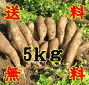 ※ (10000917) where road postage according to 5 kg of ヤーコン straight potato ※ such as the fruit, northeastern 300 yen, Hokkaido suffer from Okinawa 500 yen