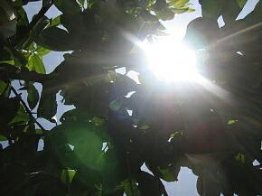 日照時間日本一の山梨