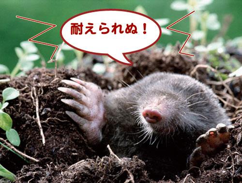 モグラの画像 p1_12
