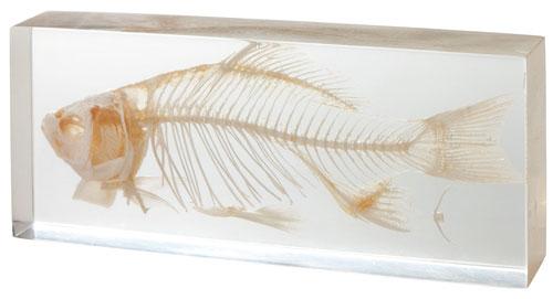 看货真价实的动物的骨架,能学骨架标本 树脂封入各种各样脊椎动物的