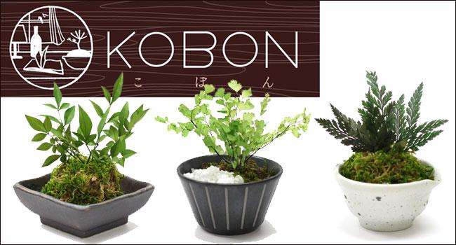 小さな盆栽 KOBON