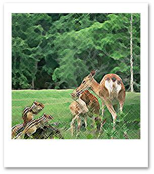 うさぎ、りす、森の動物たち【イメージ写真】
