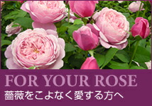 FOR YOUR ROSE
