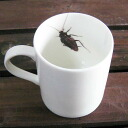 Interesting goods | Mug cup | of an insect, the pest Insect mug _ cockroach ≪ Halloween | Present | Birthday party | Bingo | Premium≫