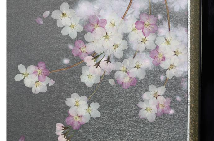 美光作 雅なこころ 御雛 夜桜
