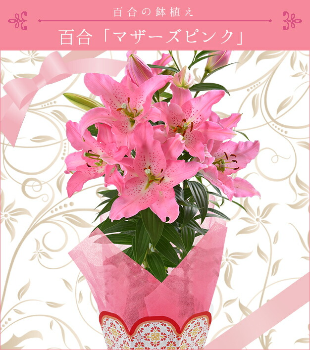 百合【マザーズピンク】